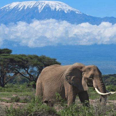 Tanzania 2018 - Anna Winship