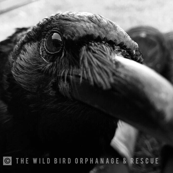 The Wild Bird Orphanage