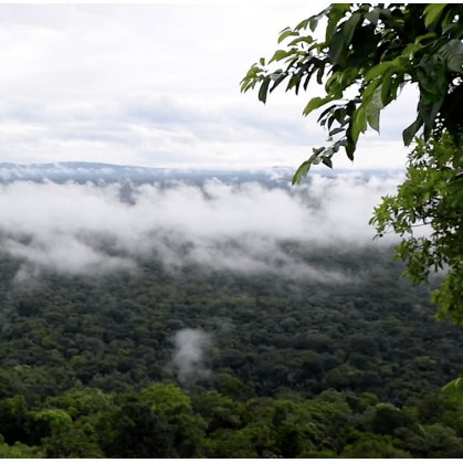 Guyana 2019 - William Sutton