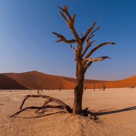 Namibia 2020 - Annie Wood