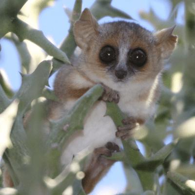 Operation Wallacea Madagascar 2017 - Megan Boreham