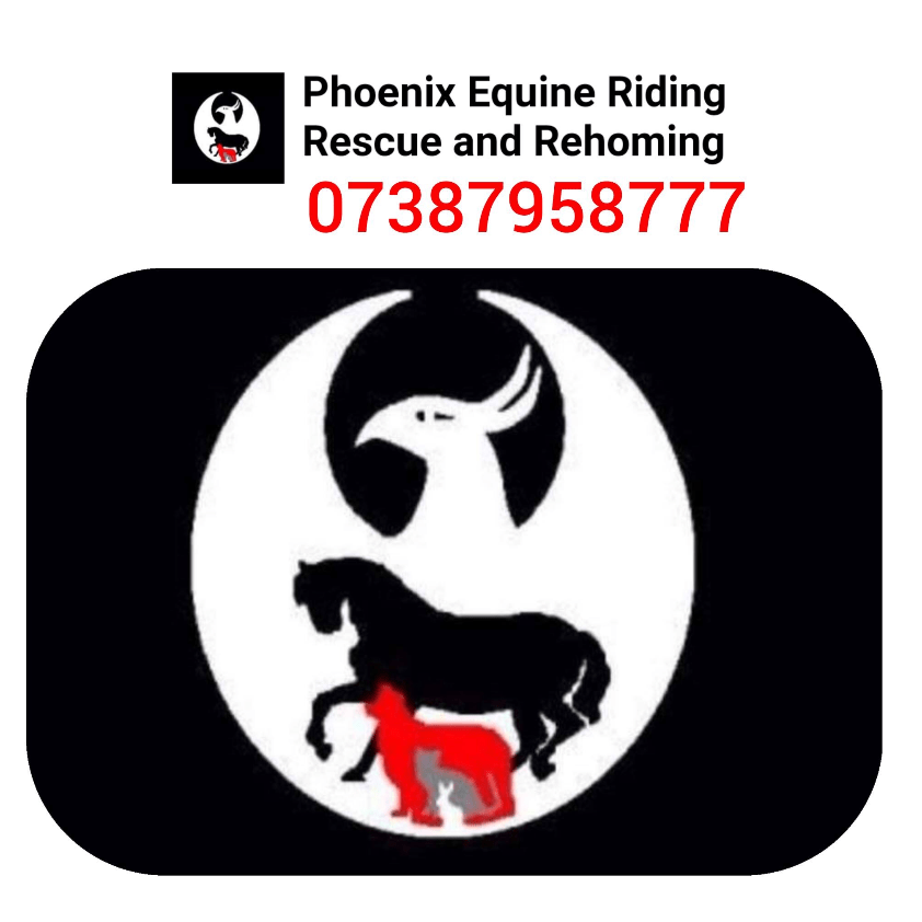 Phoenix Equine Riding Rescue and Rehoming
