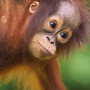 Camps International Borneo 2020 - Jack Daws
