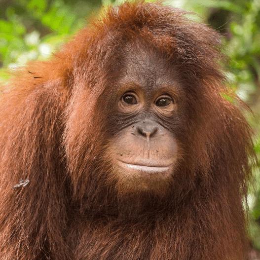 Borneo 2019 - Michelle Barclay