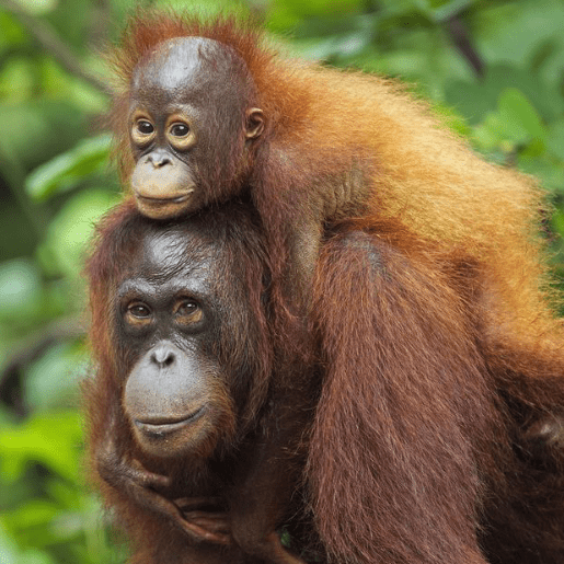 World Challenge Borneo 2020 - Molly Finley