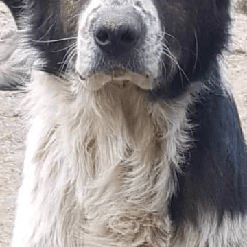 Paws In Our Hearts Bosnian Dog Rescue