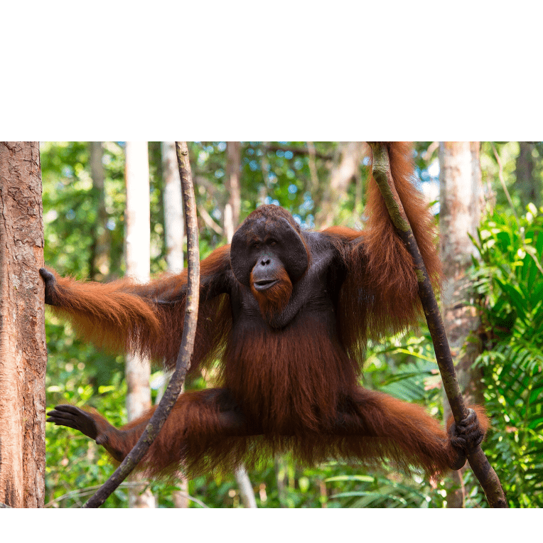 Camps International Borneo 2021 - Charlie Simmonds
