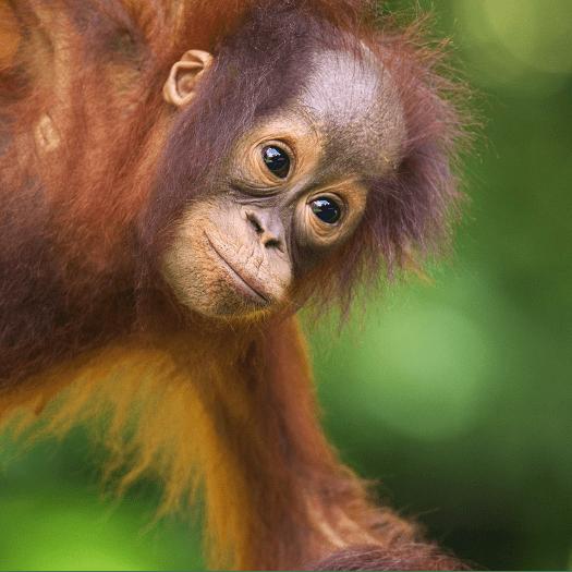 Borneo 2018 - Lauren Hannam