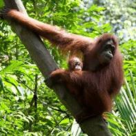 Camp International Borneo 2019 - Hannah Kemsley