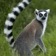 World Challenge Madagascar, 2019  - Ellen Watters