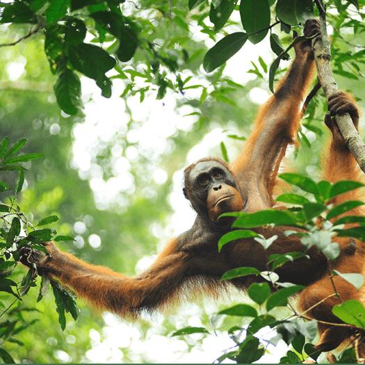 World Challenge Borneo 2021 - Romilly Lowe