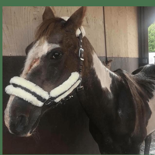 Kilmarnock Horse Rescue