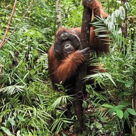 Borneo 2020 - Emilia Forster