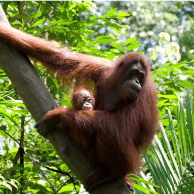 Borneo 2020 - Maddi Butler