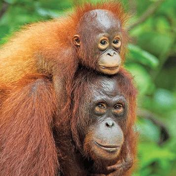 Borneo 2019 - Hannah Bingham