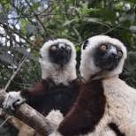Operation Wallacea Madagascar 2020 - Sade Toye