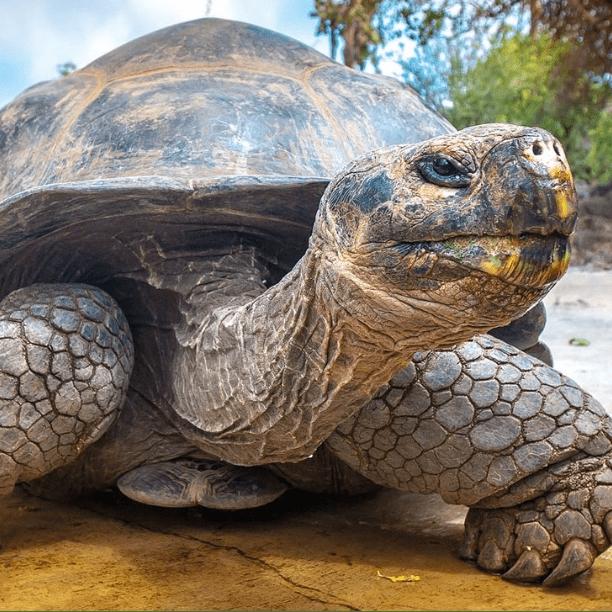 Ecuador & The Galapagos 2020 - Luke Forte
