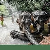 Thailand 2019 - Amy Chatt