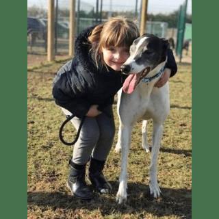 Greyhound Trust Skegness