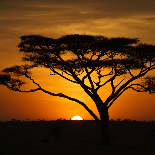 World Challenge Tanzania 2021 - Sakurako Hamagami