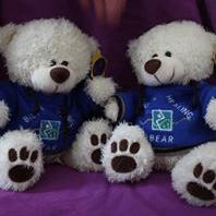 Healing Bear Project - Gloucester