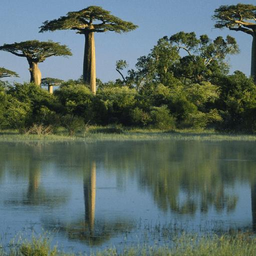 World Challenge Madagascar - Alicia Burden