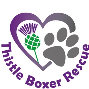 Thistle Boxer Rescue