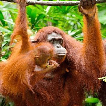 Camps International Borneo 2020 - Doug