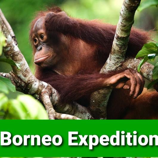World Challenge Borneo 2022 - Ashden Page