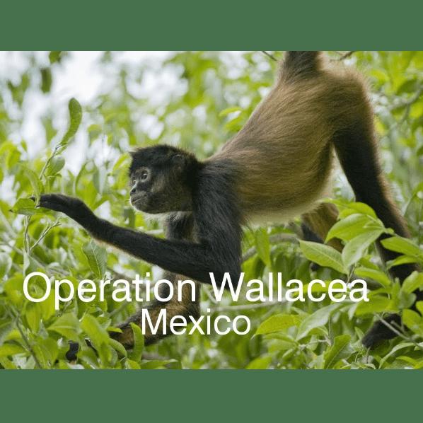 Operation Wallacea Mexico 2020 - Tara Bhachu
