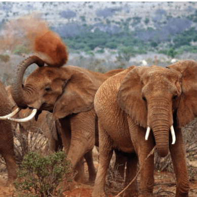 Camps International Kenya 2021 - Louis Cowlishaw