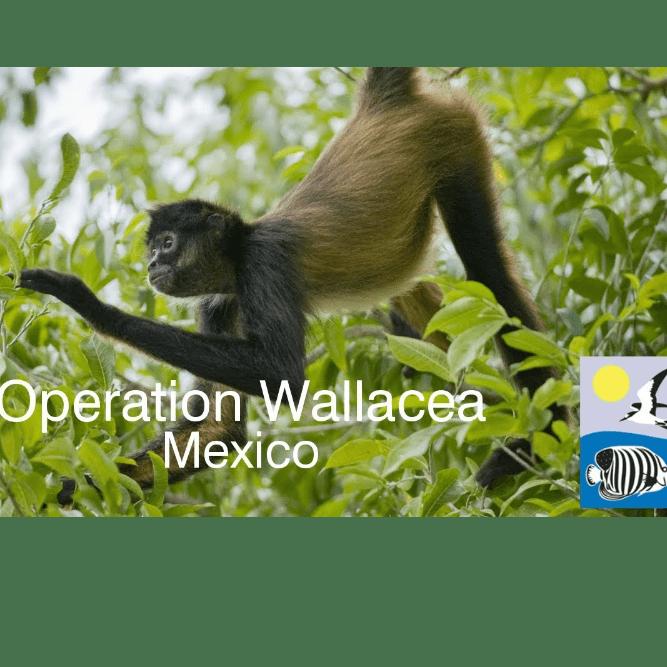 Operation Wallacea Mexico 2020 - Madeleine Batten-Plowright