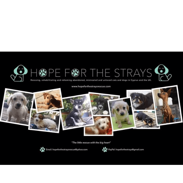 Hope For The Strays Cyprus - Sarah Gleave
