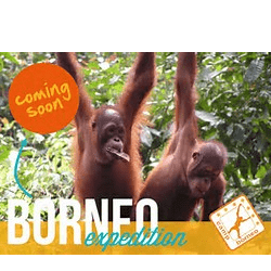 Camps International Borneo 2018 - Amy Mcconnell