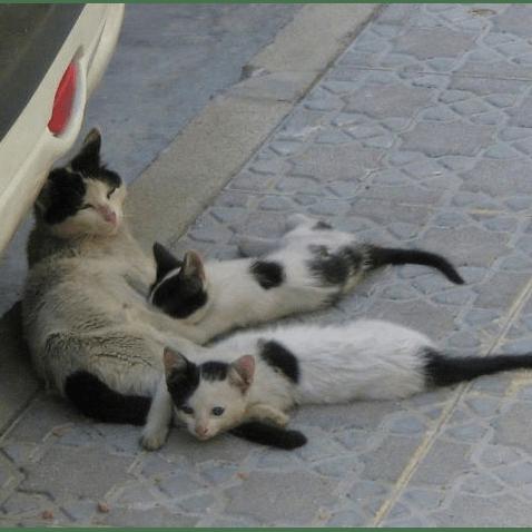 Canillas de Aceituno Cat Neutering Programme