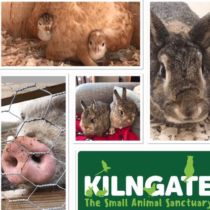 Kilngate The Small Animal Sanctuary