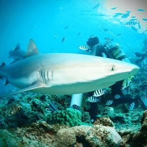 Projects Abroad Fiji 2020 - Jenny Marsh