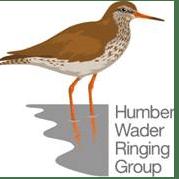 Humber Wader Ringing Group