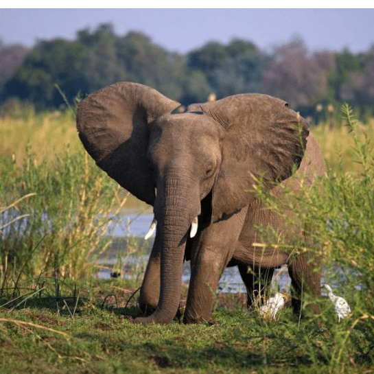 Zambia 2018 - Erin Whalan
