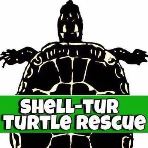 Shell-Tur Turtle Rescue