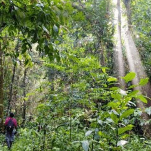 World Challenge Borneo 2019 - Lauren Shepherd