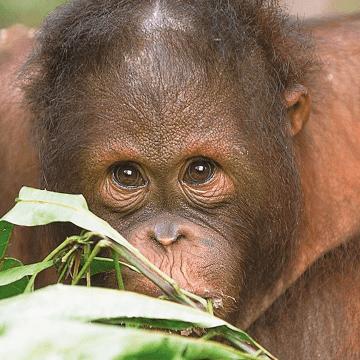 Camps International Borneo 2021 - Laila
