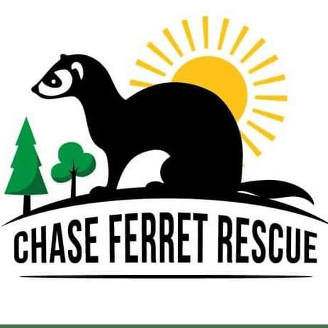 Chase ferret rescue