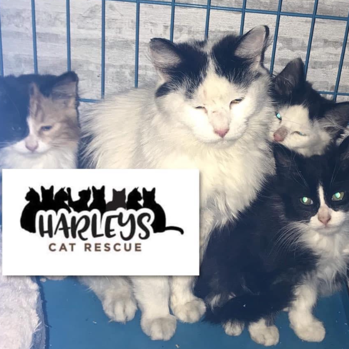Harleys Cat Rescue Manchester