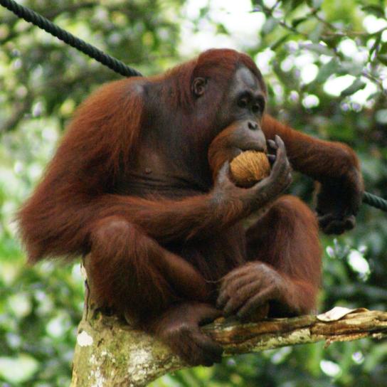 World Challenge Borneo - Isabelle Aaron - 2022