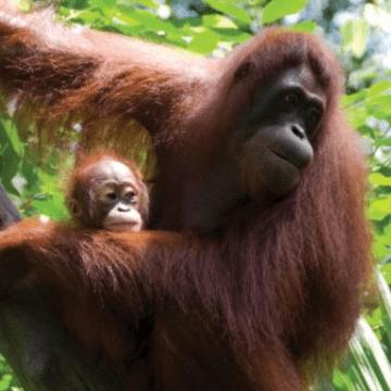 Borneo 2021 - Zantay Revell