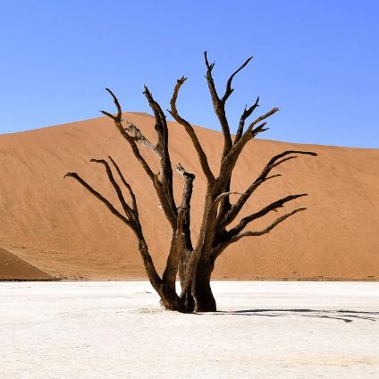 Namibia challenge - Laurence Koe