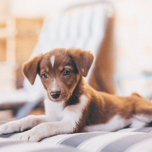 Morocco Animal Aid