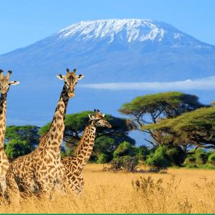 Dig Deep Kilimanjaro 2021 - Lauren Miller