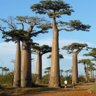 World Challenge Madagascar 2019 - Alex Daniels